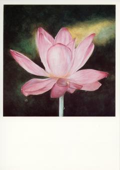 PK Lotus